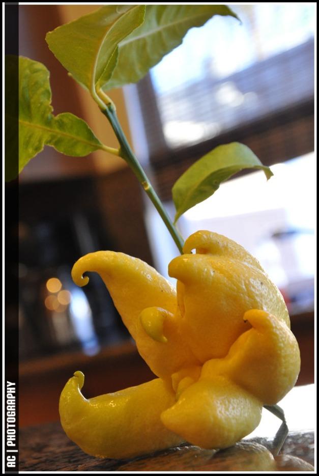 DSC_0013_Lemon_ac
